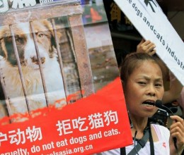 many_chinese_people_are_fighting_to_save_dogs_right3