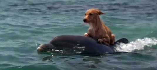 Dogs best acquatic friends